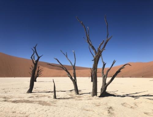 Mundo editado pela Natureza